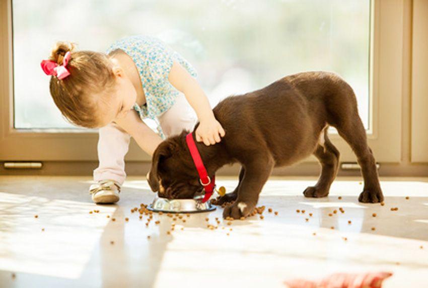 Haustiere richtig halten